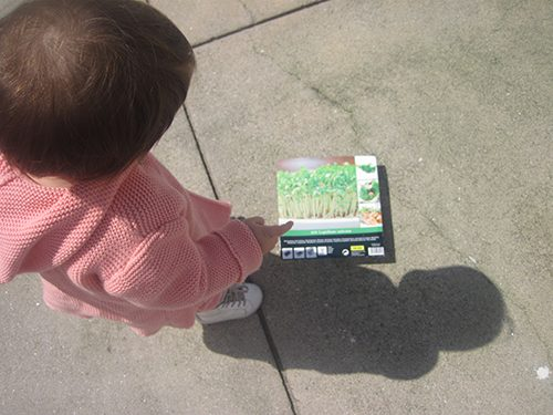 plantar agriões