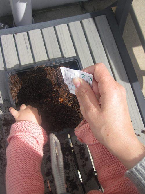 semear agriões