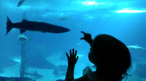 criança e barracuda